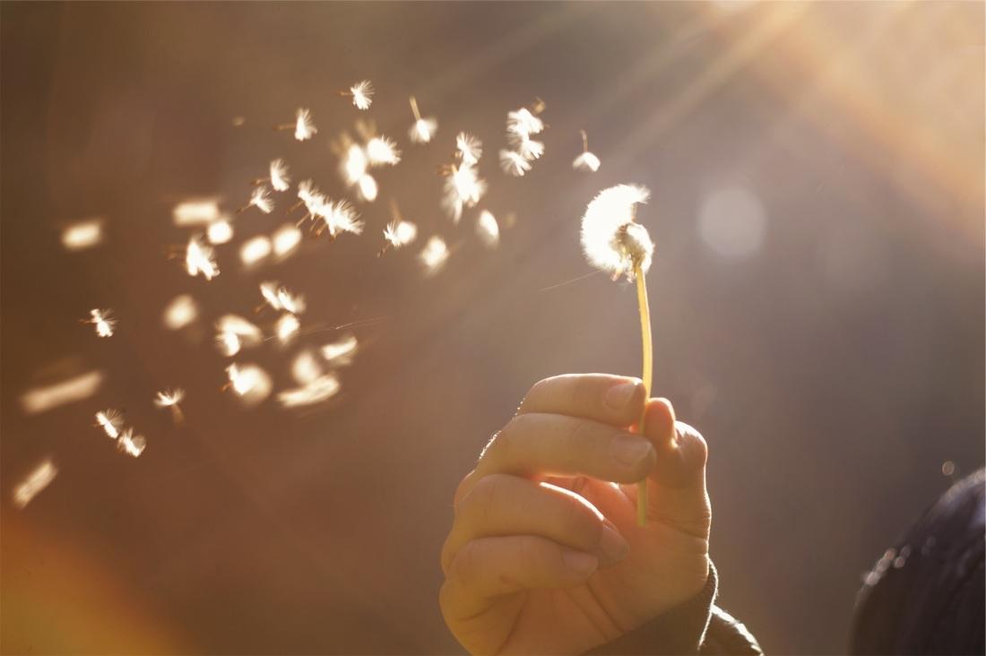 dandelion hand